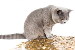 חתול שומר על הכסף